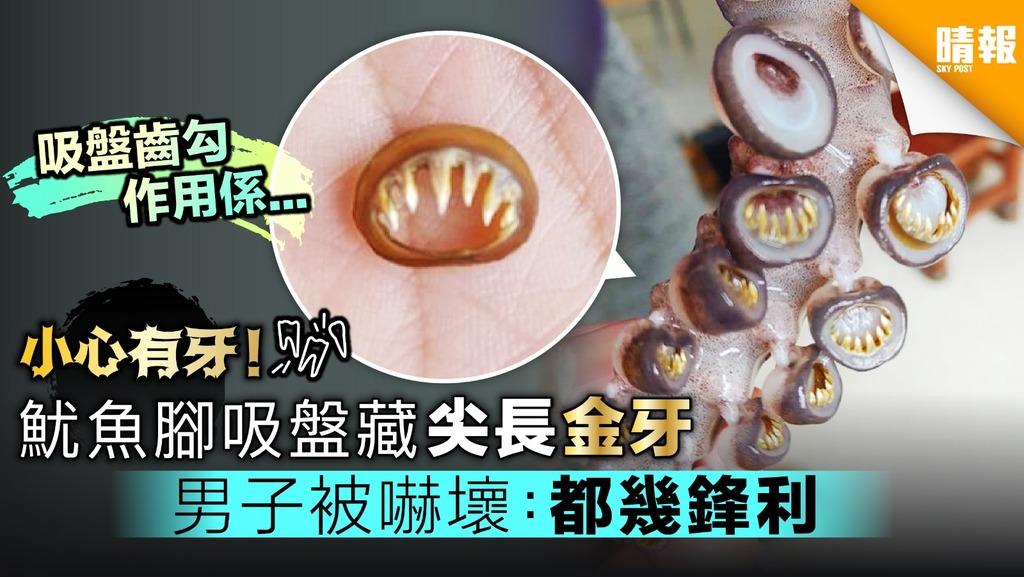 小心有牙!魷魚腳吸盤藏尖長金牙 男子被嚇壞:用牙籤逐一挖出