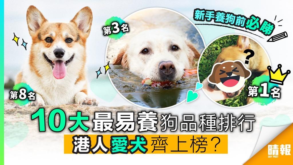十大最易養狗品種排行 港人愛犬齊上榜?