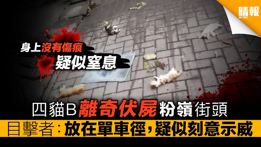 四貓B離奇伏屍粉嶺街頭 目擊者︰放在單車徑,疑似刻意示威