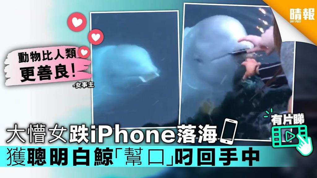 超神奇!大懵女跌iPhone落海 獲聰明白鯨「幫口」叼回手中