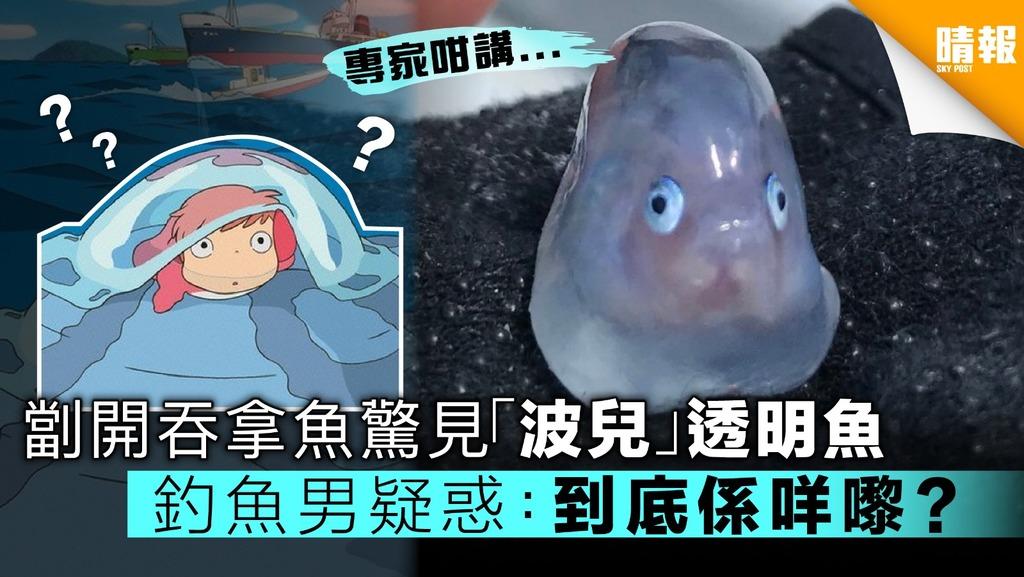 【連佢都讚可愛】劏開吞拿魚驚見「波兒」透明魚 日釣魚男網上求問真身