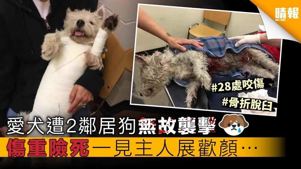 愛犬遭2鄰居狗無故襲擊 傷重險死 一見主人展歡顏…