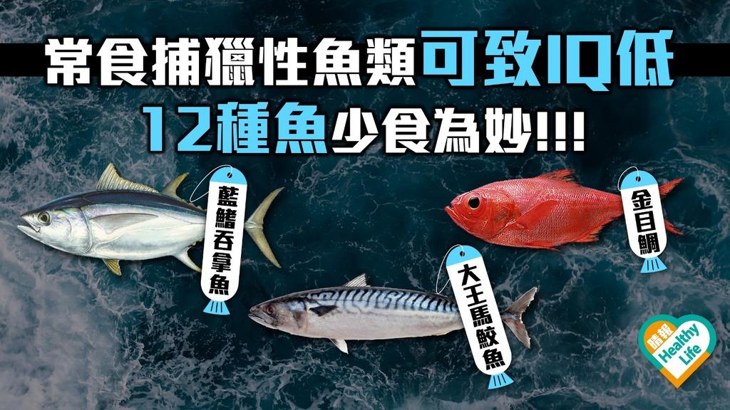 常食捕獵性魚類可致IQ低 12種魚少食為妙!!!