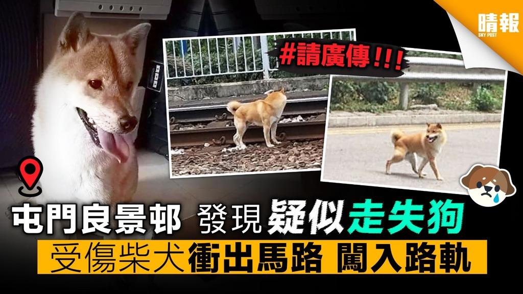 (請廣傳) 受傷柴犬衝出馬路 闖入路軌 屯門良景邨 發現「疑似走失狗」