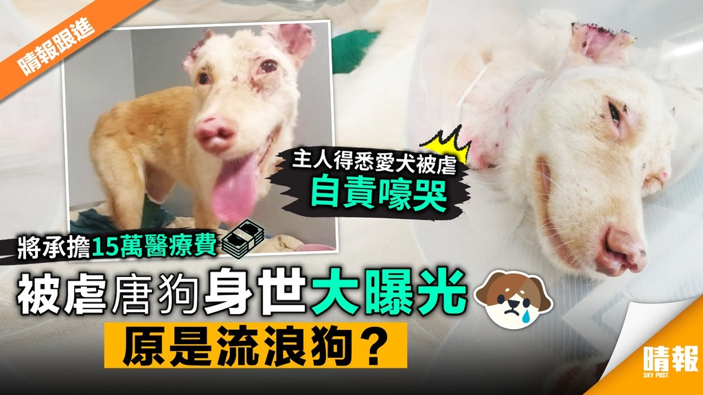 被虐唐狗身世大曝光 原是流浪狗?