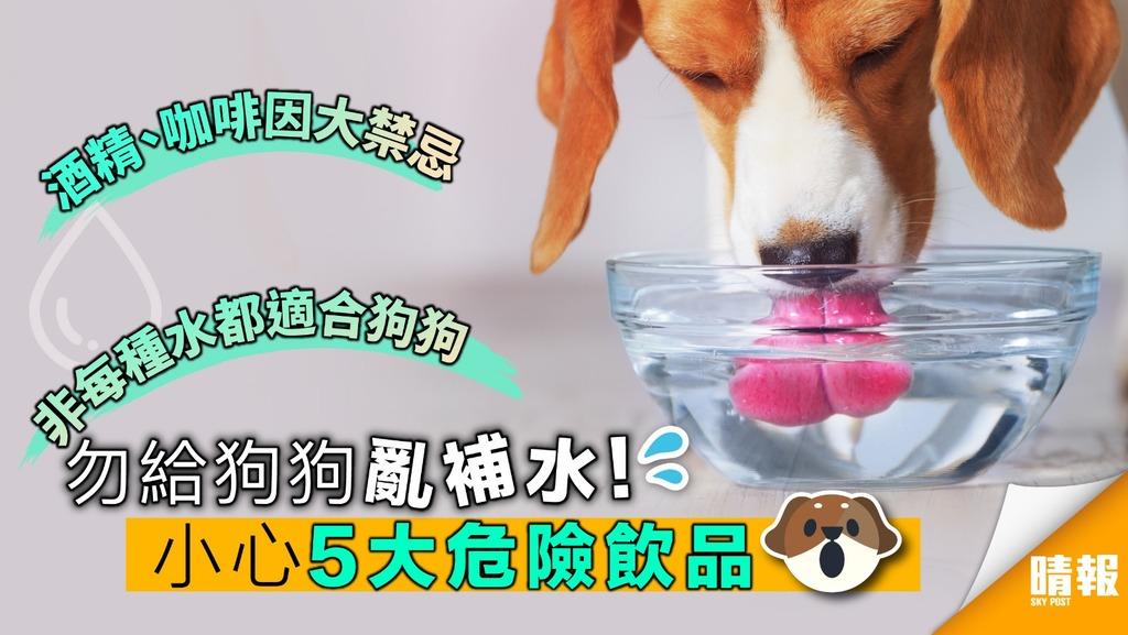 勿給狗狗亂補水!小心5大危險飲品