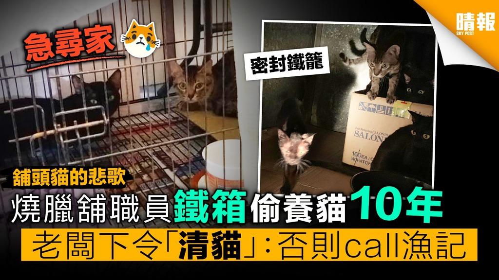 燒臘舖職員鐵箱偷養貓10年 老闆下令「清貓」︰否則call漁記