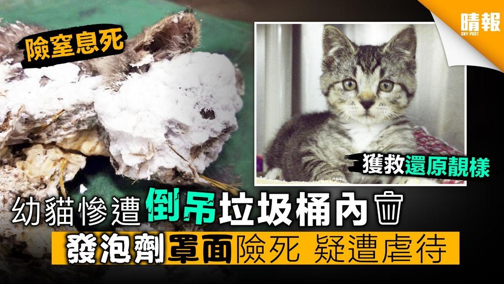 幼貓慘遭倒吊垃圾桶內 發泡劑罩面險死 疑遭虐待