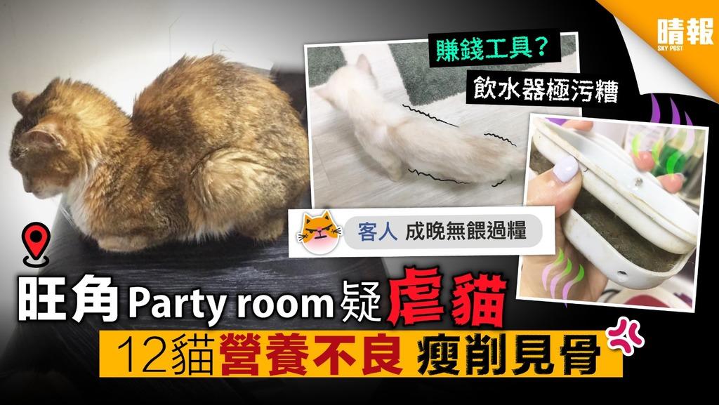 旺角Party room疑虐貓 12貓營養不良 瘦削見骨