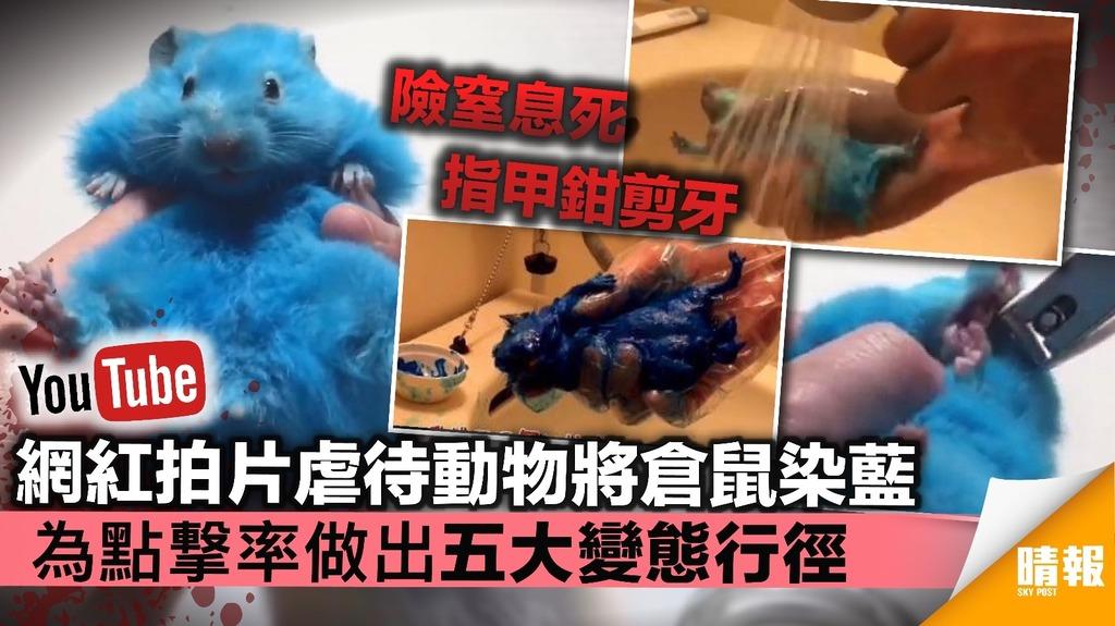【內有聯署網址】網紅拍片虐待動物將倉鼠染藍 為點撃率做出五大變態行徑