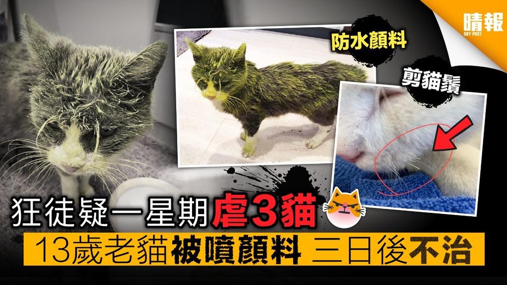 狂徒疑一星期虐3貓 13歲老貓被噴顏料 三日後不治
