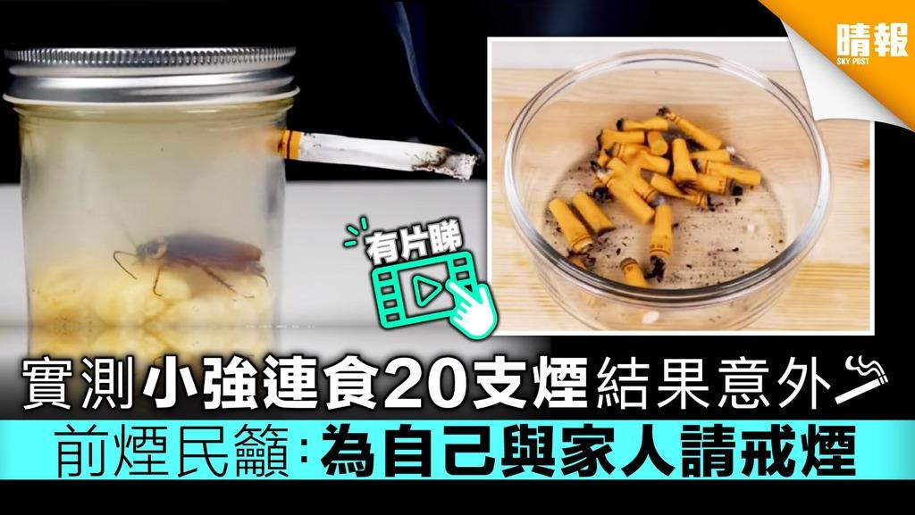 【有片睇】實測小強連食20支煙結果意外 前煙民籲:為自己與家人請戒煙