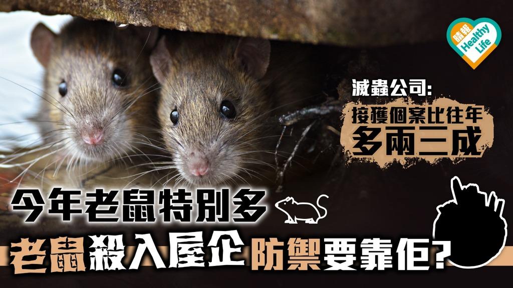 今年老鼠特別多 老鼠殺入屋企 防禦要靠佢? 【蟲出沒】