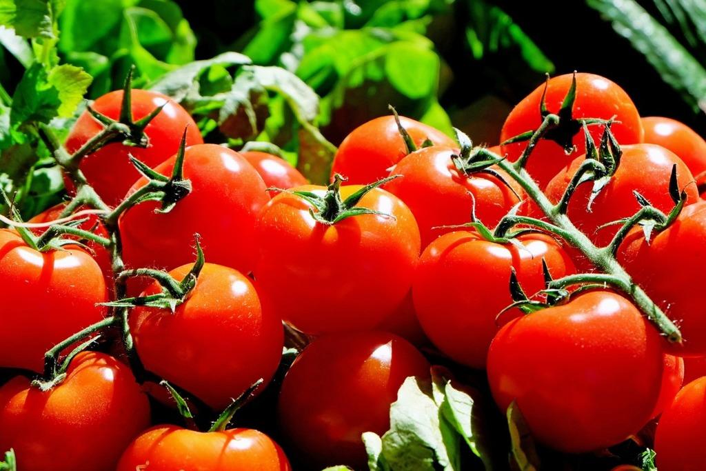 【夜間番茄減肥法】林志玲都靠食番茄keep fit!醫生/番茄達人推薦晚上番茄瘦身法