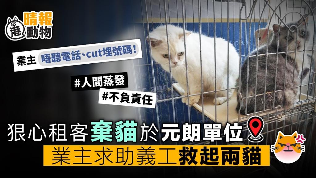 狠心租客棄貓於元朗單位 拒聽電話人間蒸發 業主求助義工救起兩貓