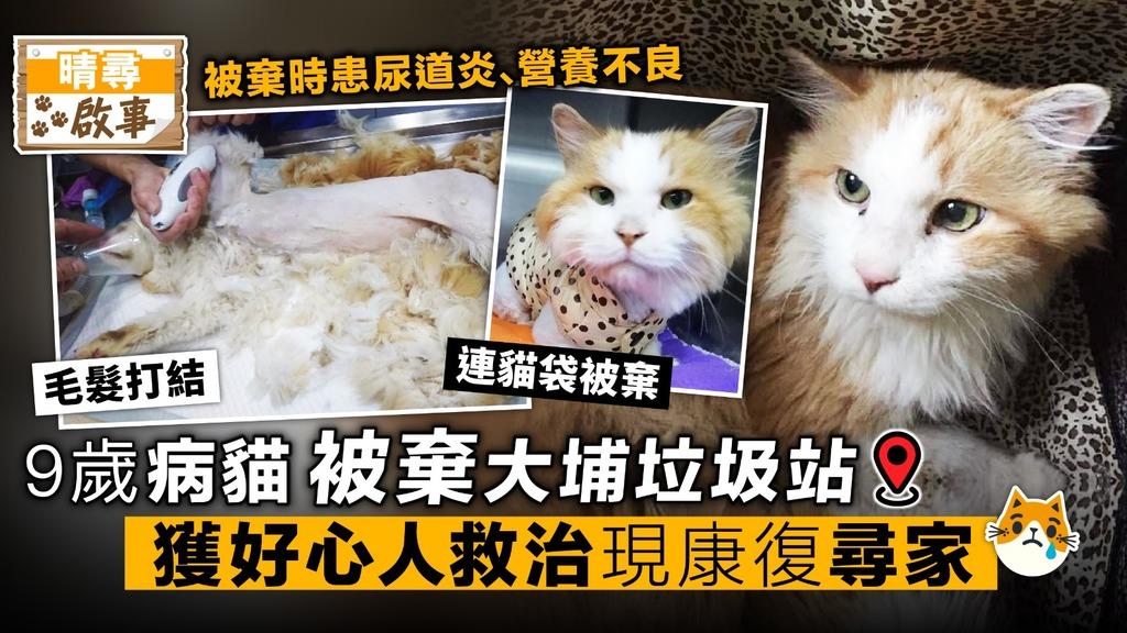 9歲病貓被棄大埔垃圾站 獲好心人救治 現康復尋領養