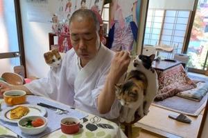 日本寺廟主持與4隻愛貓食早餐 超有教養等主人埋位一齊食