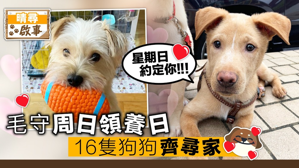 【晴尋啟事】毛守周日領養日 15隻狗狗齊尋家