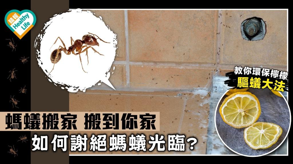 螞蟻搬家 搬到你家 如何謝絶螞蟻光臨? 【蟲出沒】