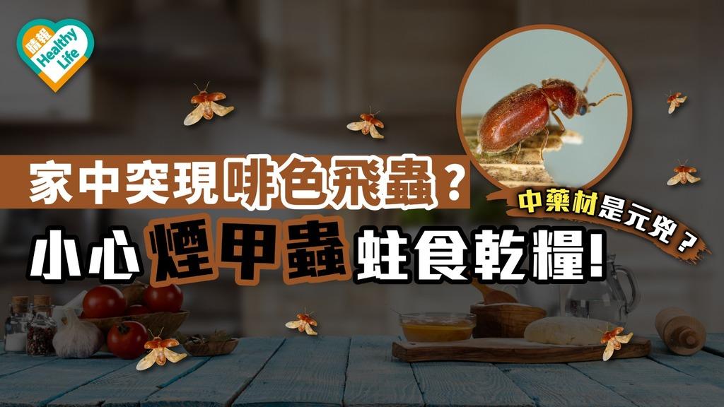 煙甲蟲家中橫飛!乾燥食品被蛀食後恐全報銷【蟲出沒】