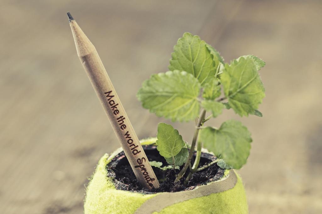 可種植鉛筆