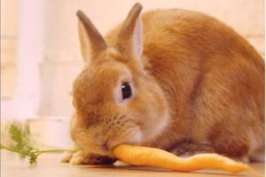 【東京 兔仔Cafe】日本東京人氣兔仔Cafe 一人一隻指定兔仔任摸任餵!