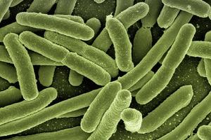 【記得洗手】7大多細菌病毒的食飯必經地方 接觸後要洗手 保持清潔衞生