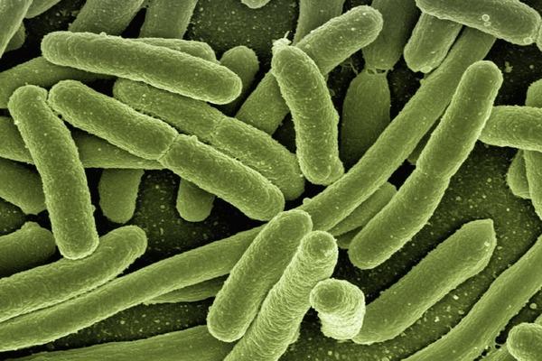 細菌多的地方