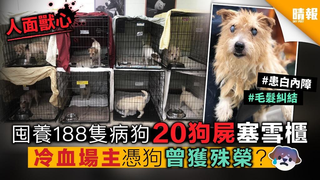 囤養188隻病狗 20狗屍塞雪櫃 冷血場主憑狗曾獲殊榮?