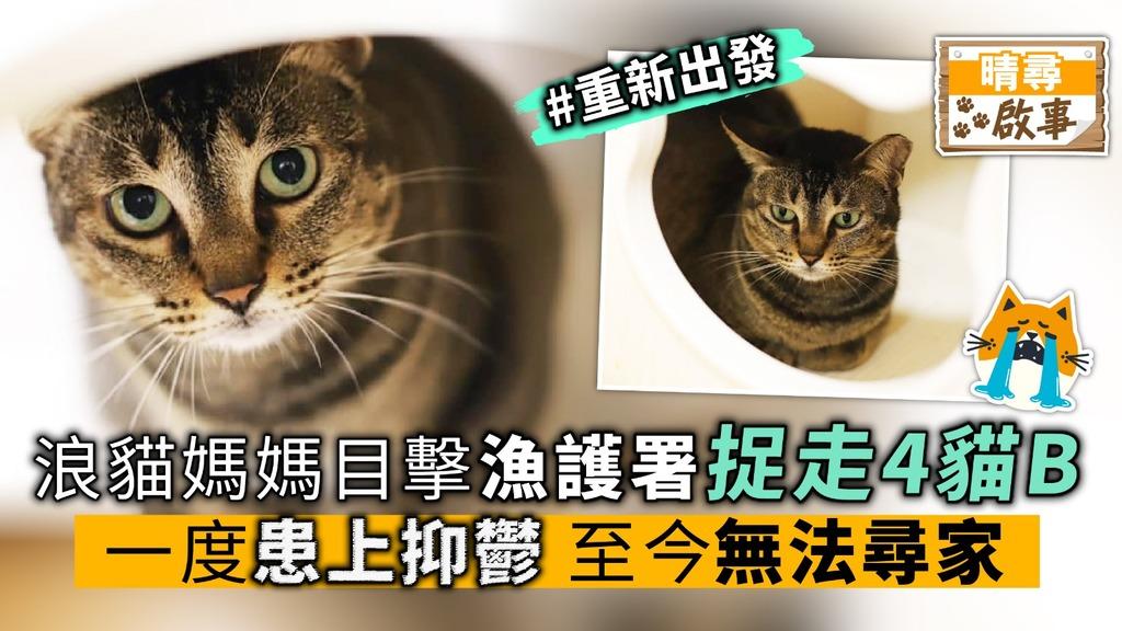 浪貓媽目擊 4貓B被捉走 一度患上抑鬱 至今無法尋家