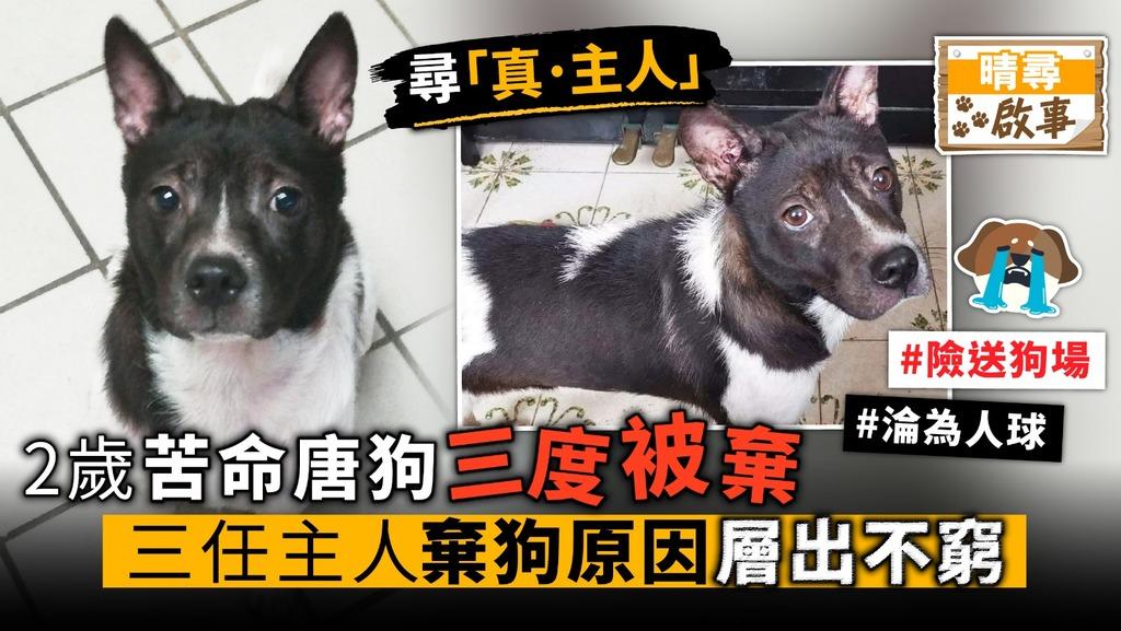 2歲苦命唐狗 三度被棄 三任主人 棄狗原因層出不窮