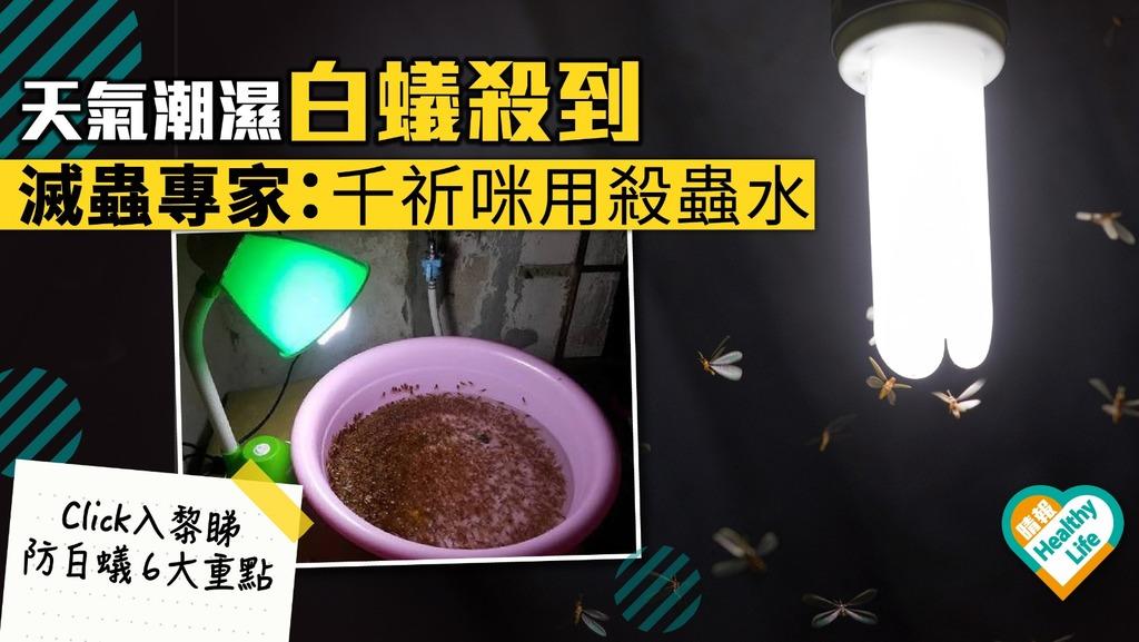 天氣潮濕白蟻殺到 滅蟲專家:千祈咪用殺蟲水 【蟲出沒】