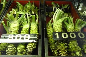 【山葵營養】山葵9大好處和營養價值 預防蛀牙/骨質疏鬆/減肥/殺菌
