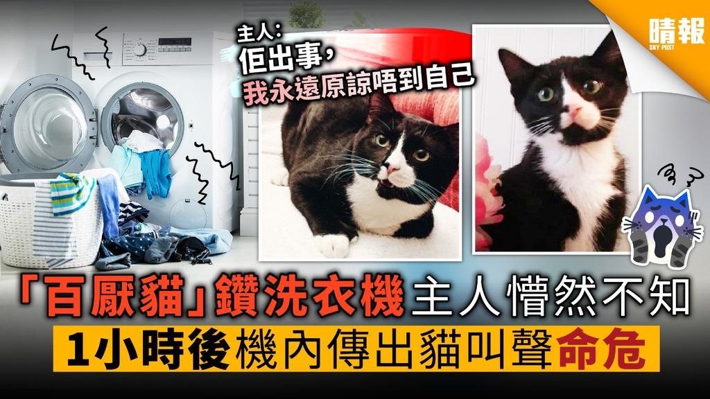 「百厭貓」鑽洗衣機 1小時後才被發現 肺積水命危