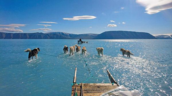 格陵蘭不尋常融冰 雪橇狗「水上漂」