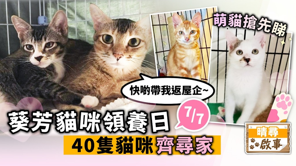 【晴尋啟事】葵芳周日領養日 40隻貓咪齊尋家 超萌貓搶先睇