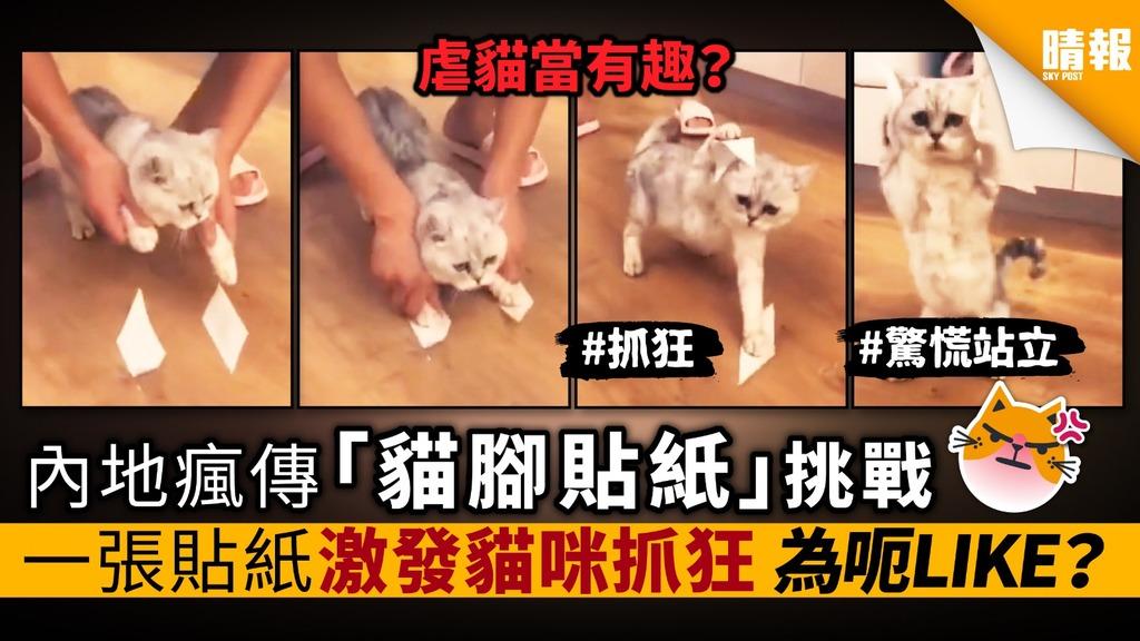 內地瘋傳 「貓腳貼紙」挑戰 一張貼紙激發貓咪抓狂 為呃LIKE?