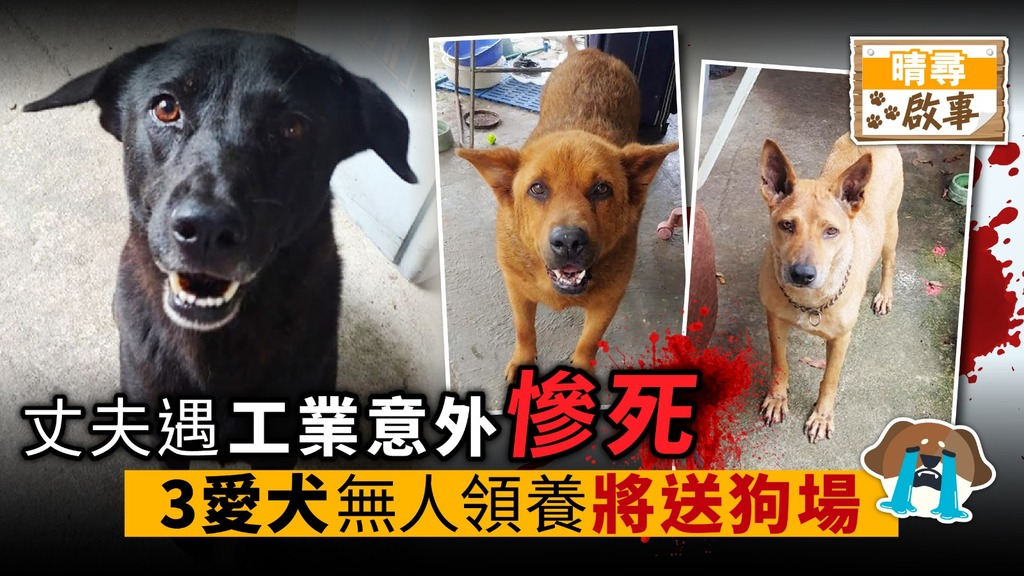 丈夫遇工業意外慘死 3愛犬無人領養 將送狗場