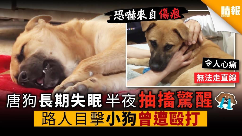 唐狗長期失眠 半夜抽搐驚醒 路人目擊小狗曾遭毆打