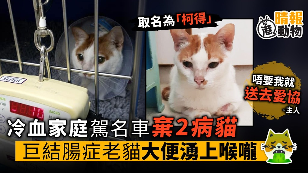 冷血家庭駕名車棄2病貓 巨結腸症老貓大便湧上喉嚨