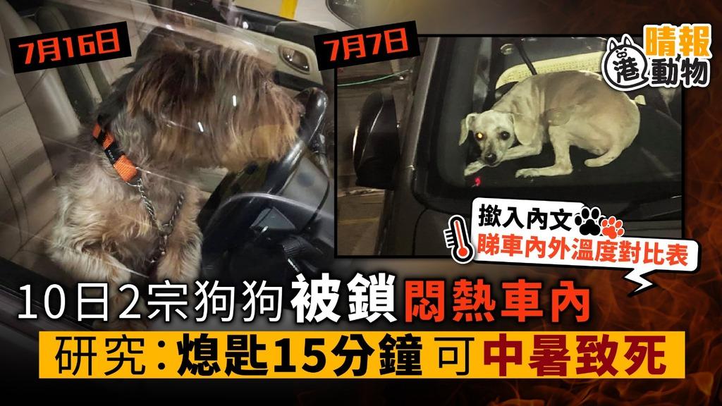 10日2宗狗狗被鎖悶熱車內 研究:熄匙15分鐘 可中暑致死