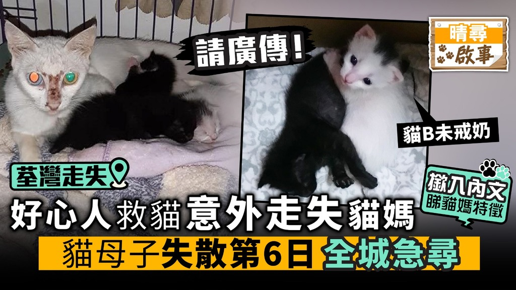 好心人救貓意外走失貓媽 貓母子失散第6日 全城急尋