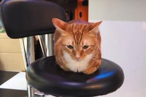 【澳門Cafe】貓迷必去! 澳門隱世貓Cafe  專門收養可愛流浪貓貓