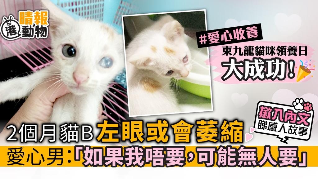 2個月貓B 左眼或會萎縮 愛心男:「如果我唔要,可能無人要」