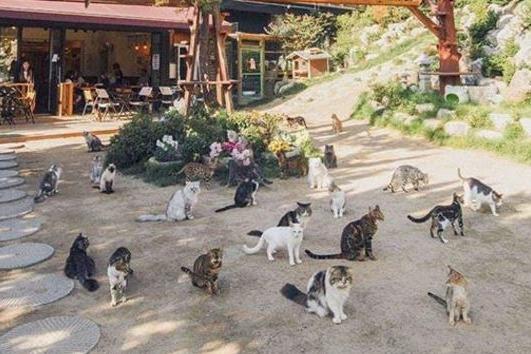 首爾野外貓貓Cafe「貓貓庭院」 101隻不同品種貓貓陪你玩
