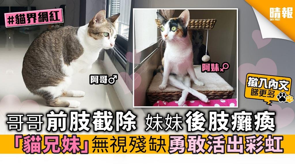 哥哥前肢截除 妹妹後肢癱瘓 「貓兄妹」無視殘缺 勇敢活出彩虹