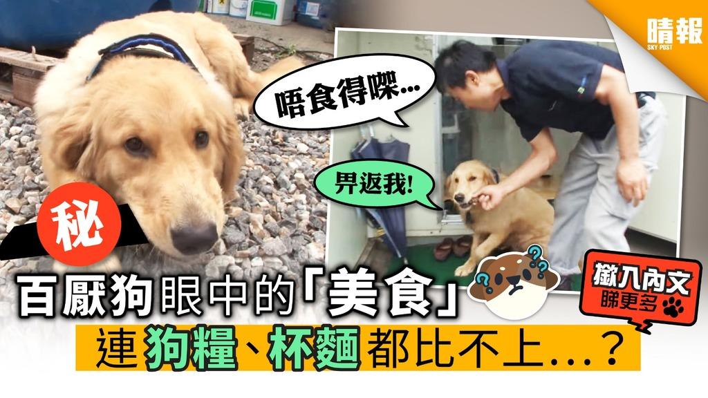 【內附影片】百厭狗眼中的「美食」 連狗糧、杯麵都比不上…?