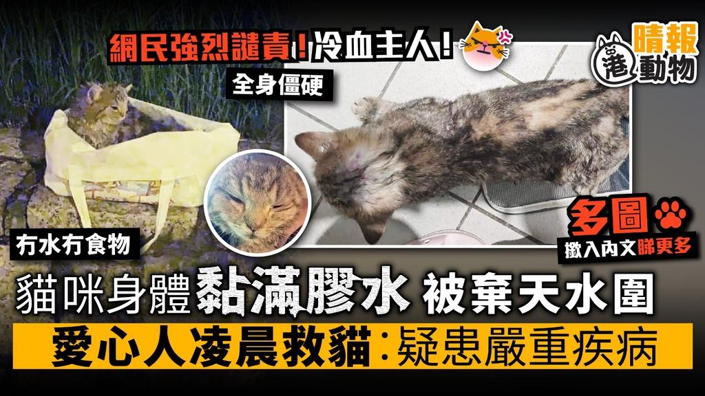 貓咪身體黏滿膠水 被棄天水圍 愛心人凌晨救貓︰貓咪疑患嚴重疾病