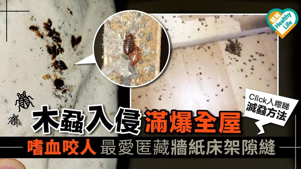 木蝨入侵滿爆全屋 嗜血咬人最愛匿藏牆紙床架隙縫【內附滅蝨方法】