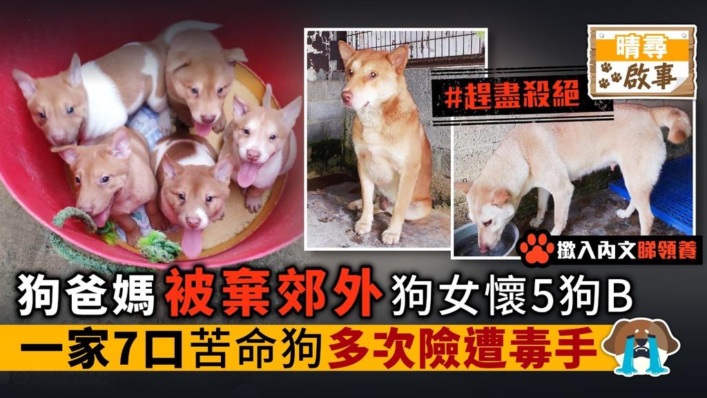 狗媽媽懷5狗B 一家7口被棄郊外 多次險遭毒手